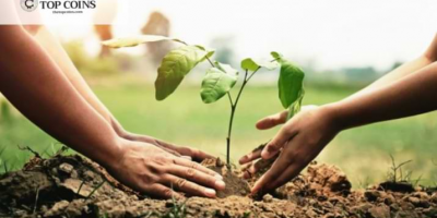 The Top Coins Team Helps with Reforestation