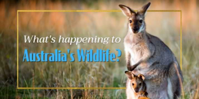 IT'S AN EMERGENCY! What You Need To Know About Australia's Wildlife