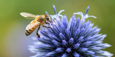 Why We Need Bees To Survive