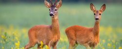 10 Easy Ways You Can Participate in Australian Wildlife Week